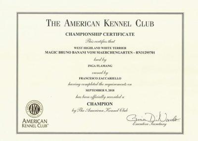 Bruno USA Champion